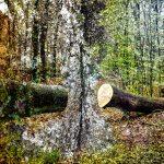 Die kleine Waldgalerie, Bad Schwartau. Ausstellung im Geibelwald und Riesebusch. Gefördert von der 'kulturhilfeSH