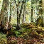 Kleine Waldgalerie, Bad Schwartau. Ausstellung im Geibelwald und Riesebusch. Gefördert von der 'kulturhilfeSK