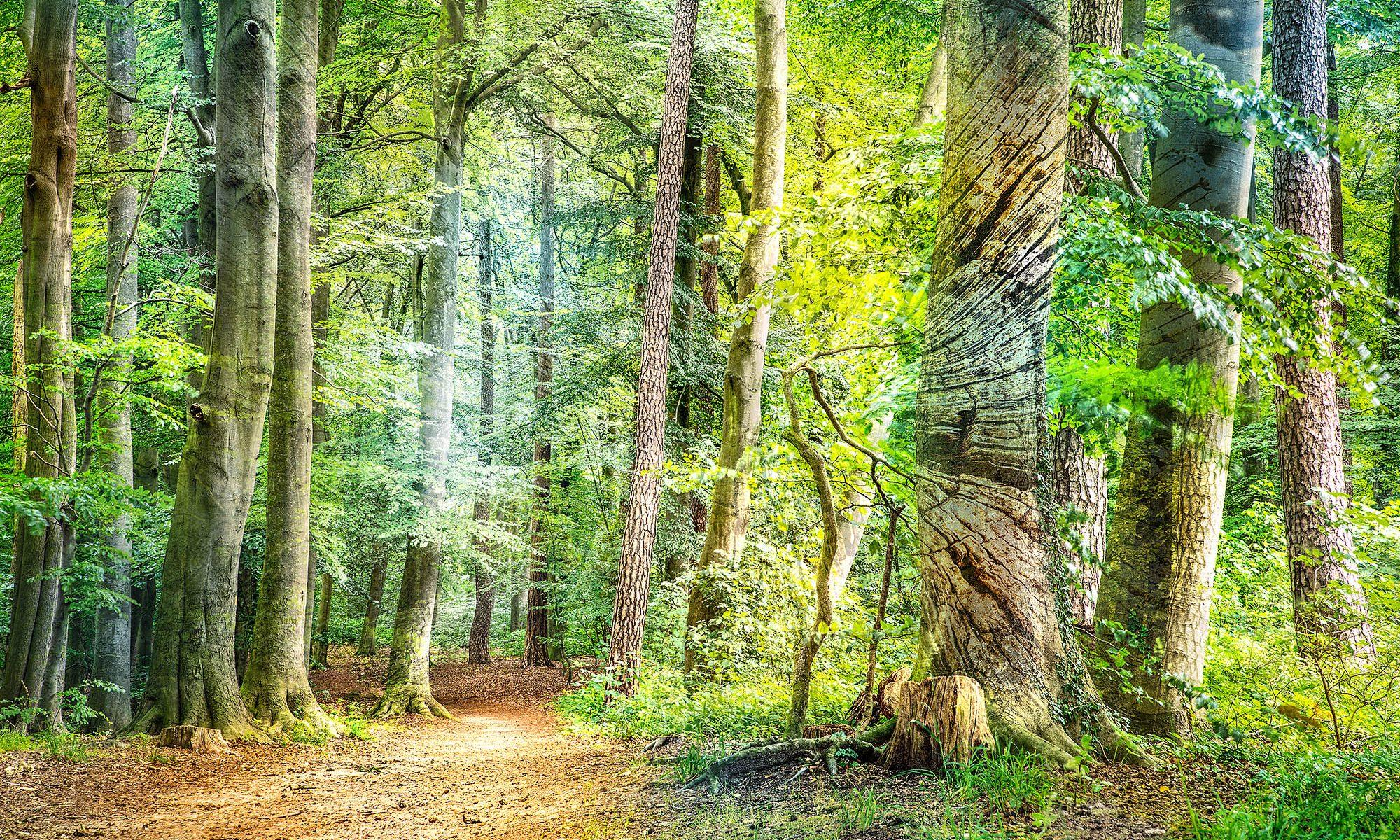 Die kleine Waldgalerie, Bad Schwartau. Ausstellung im Geibelwald und Riesebusch. Gefördert von der #kulturhilfeSH