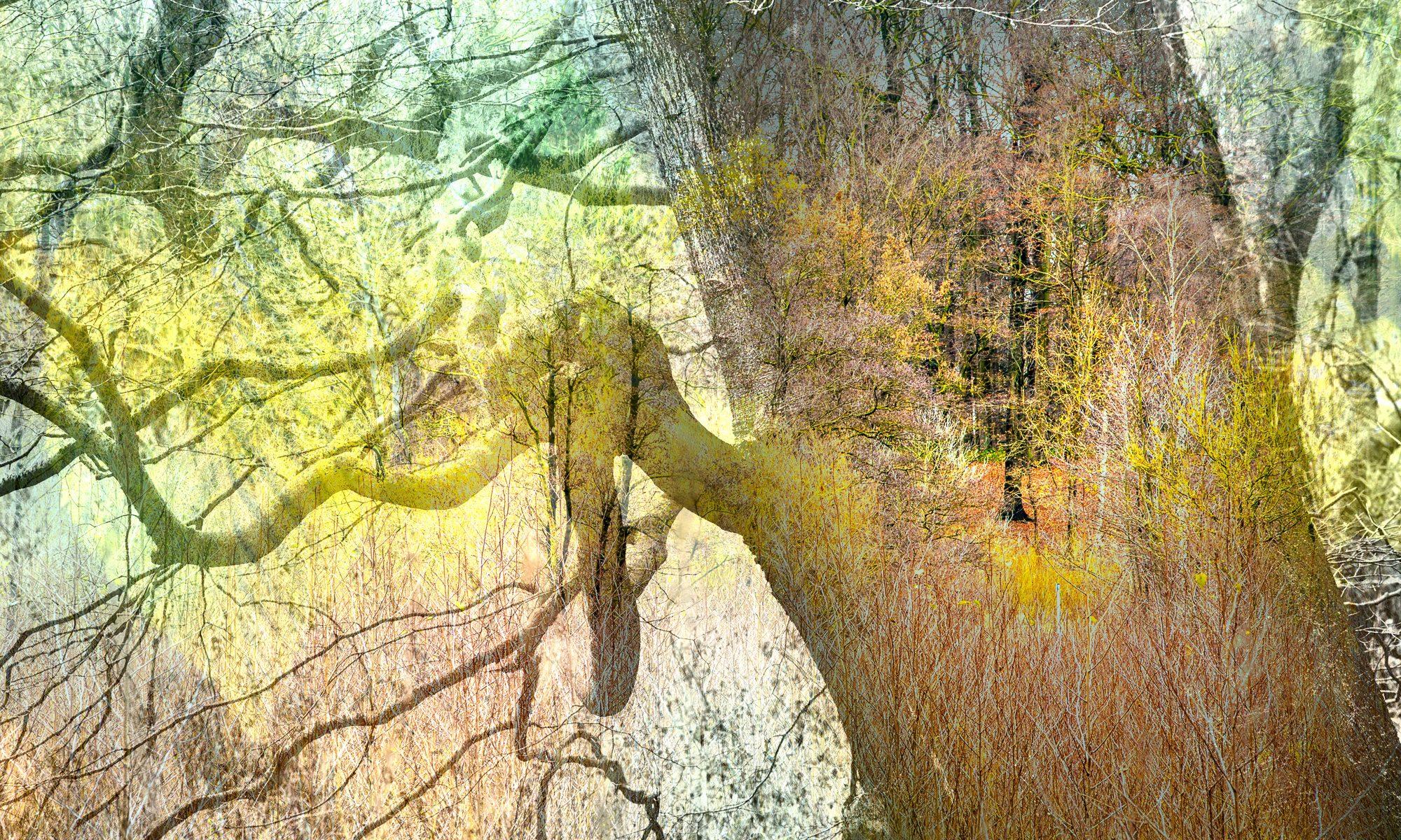 Die kleine Waldgalerie, Bad Schwartau. Ausstellung im Geibelwald und Riesebusch. Gefördert von der 'kulturhilfeSK