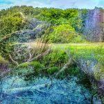 Riesebusch Bad Schwartau. Die kleine Waldgalerie