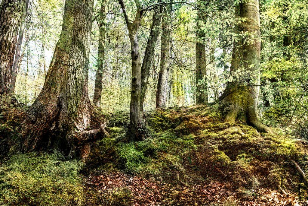 Riesenkraft ist ein Waldmotiv aus den Naturwald Riesebusch in Bad Schwartau