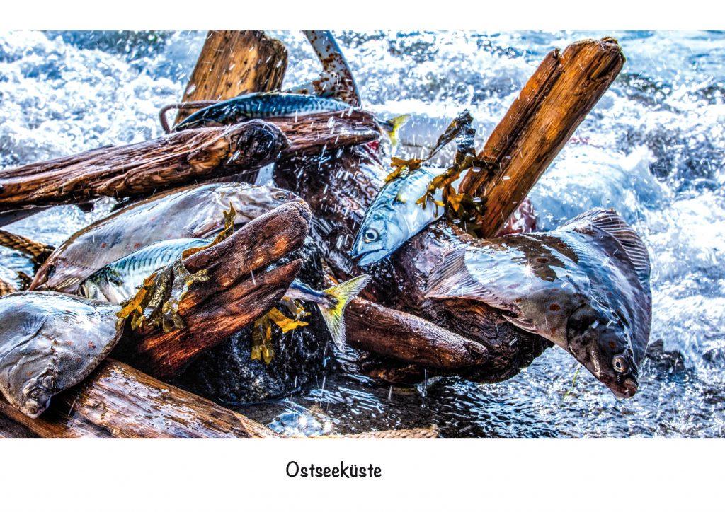 Ansichtskarte Ostsee. Ostseefisch in der Brandung