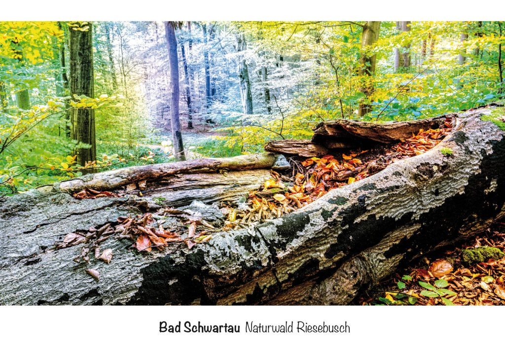 Ansichtskarten Bad Schwartau, Naturwald Riesebusch
