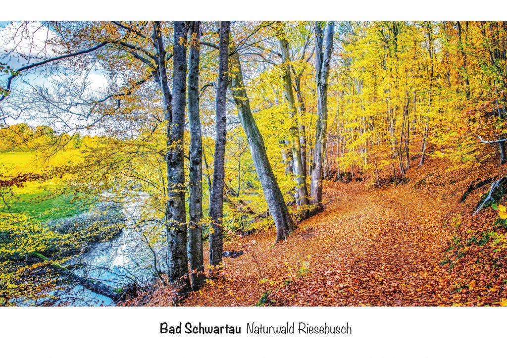 Ansichtskarte Bad Schwartau, Naturwald Riesebusch