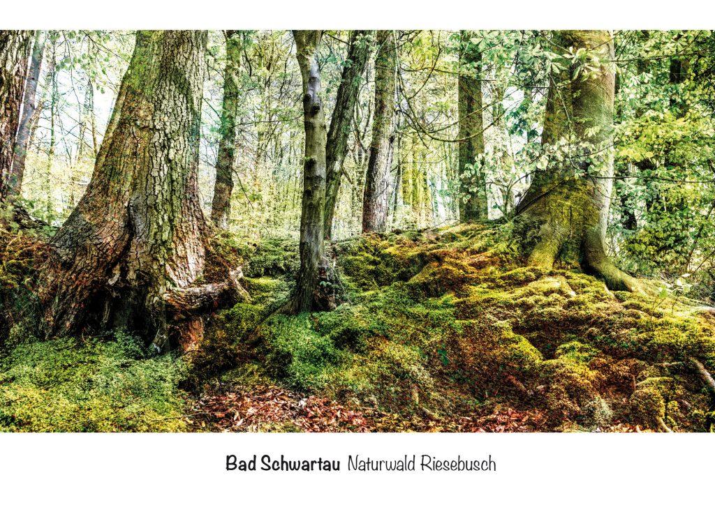Bad Schwartau, Ansichtskarte Naturwald Riesebusch